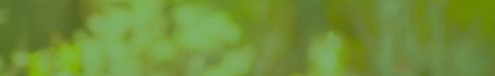 Header Hintergrund grün