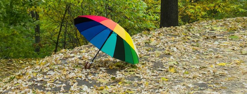 Schirm in Laub liegend
